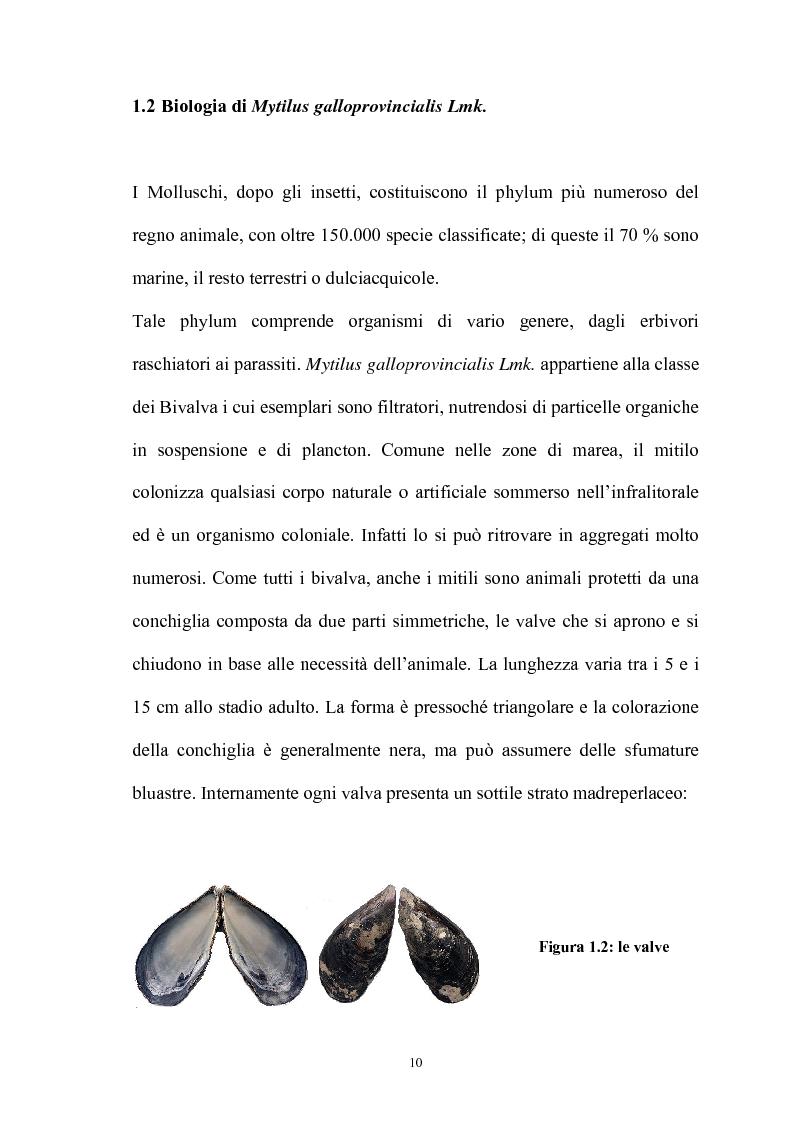 Anteprima della tesi: Effetto in vitro dei metalli pesanti piombo e mercurio sull'attività dell'enzima fosfolipasi C nelle branchie e nel mantello del mollusco marino Mytilus galloprovincialis Lmk, Pagina 10