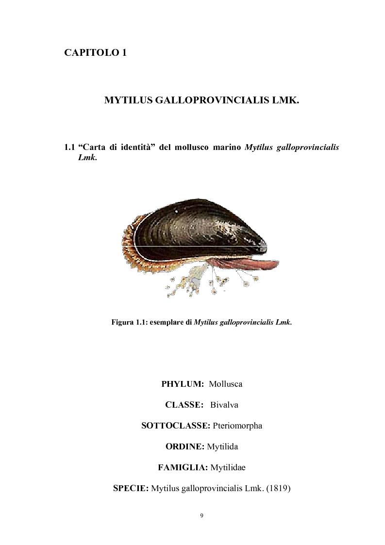 Anteprima della tesi: Effetto in vitro dei metalli pesanti piombo e mercurio sull'attività dell'enzima fosfolipasi C nelle branchie e nel mantello del mollusco marino Mytilus galloprovincialis Lmk, Pagina 9