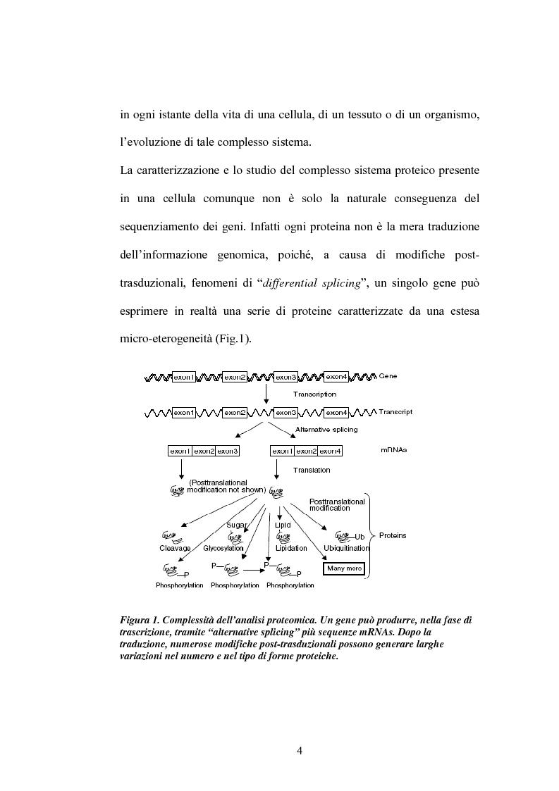 Anteprima della tesi: Studi di proteomica sulla cultivar di grano duro Simeto, Pagina 2