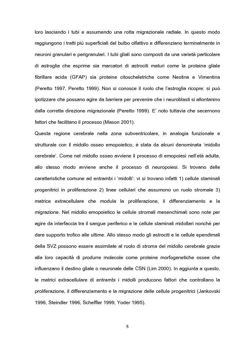 Anteprima della tesi: Differenziazione neuronale di cellule mononucleate umane derivate da sangue periferico, Pagina 6