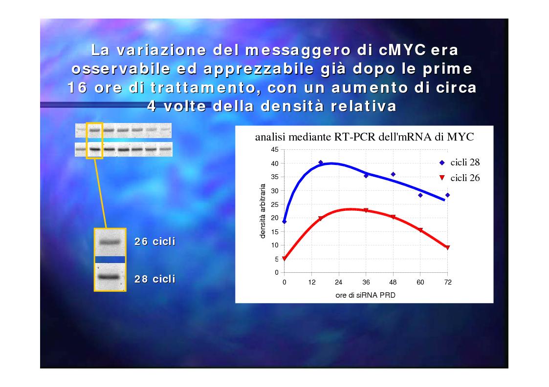 Anteprima della tesi: Prodotti del gene RIZ/PRDM2 nella proliferazione cellulare e differenziamento in vitro, Pagina 13