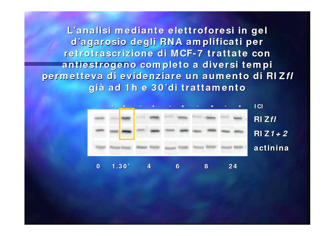Anteprima della tesi: Prodotti del gene RIZ/PRDM2 nella proliferazione cellulare e differenziamento in vitro, Pagina 6