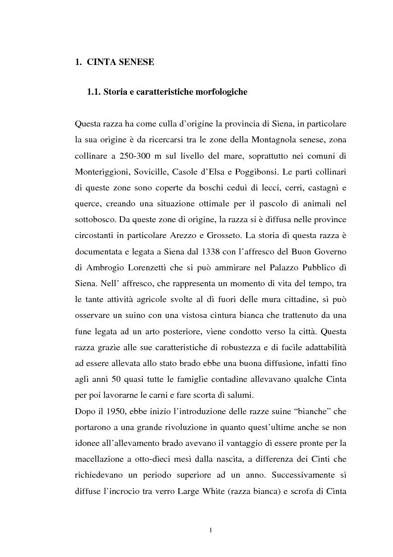 Anteprima della tesi: Come il diverso livello proteico della dieta influenza le caratteristiche chimico fisiche della carne suina in animali cinta senese, Pagina 1