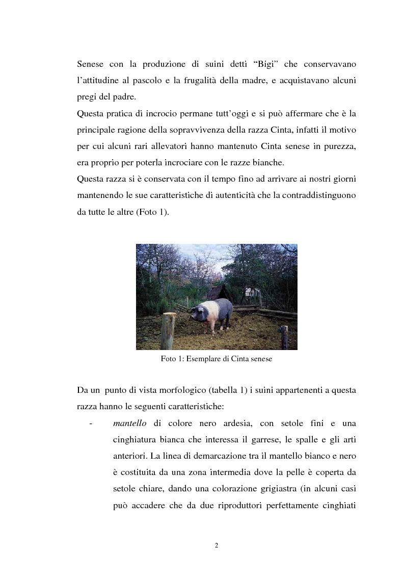 Anteprima della tesi: Come il diverso livello proteico della dieta influenza le caratteristiche chimico fisiche della carne suina in animali cinta senese, Pagina 2