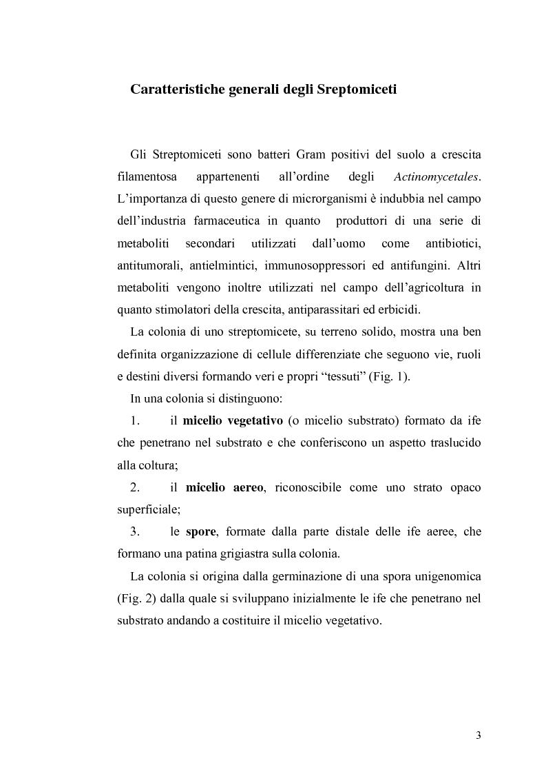 Anteprima della tesi: Complementazione della mutazione hisBp di Streptomyces coelicolor A3(2), Pagina 1