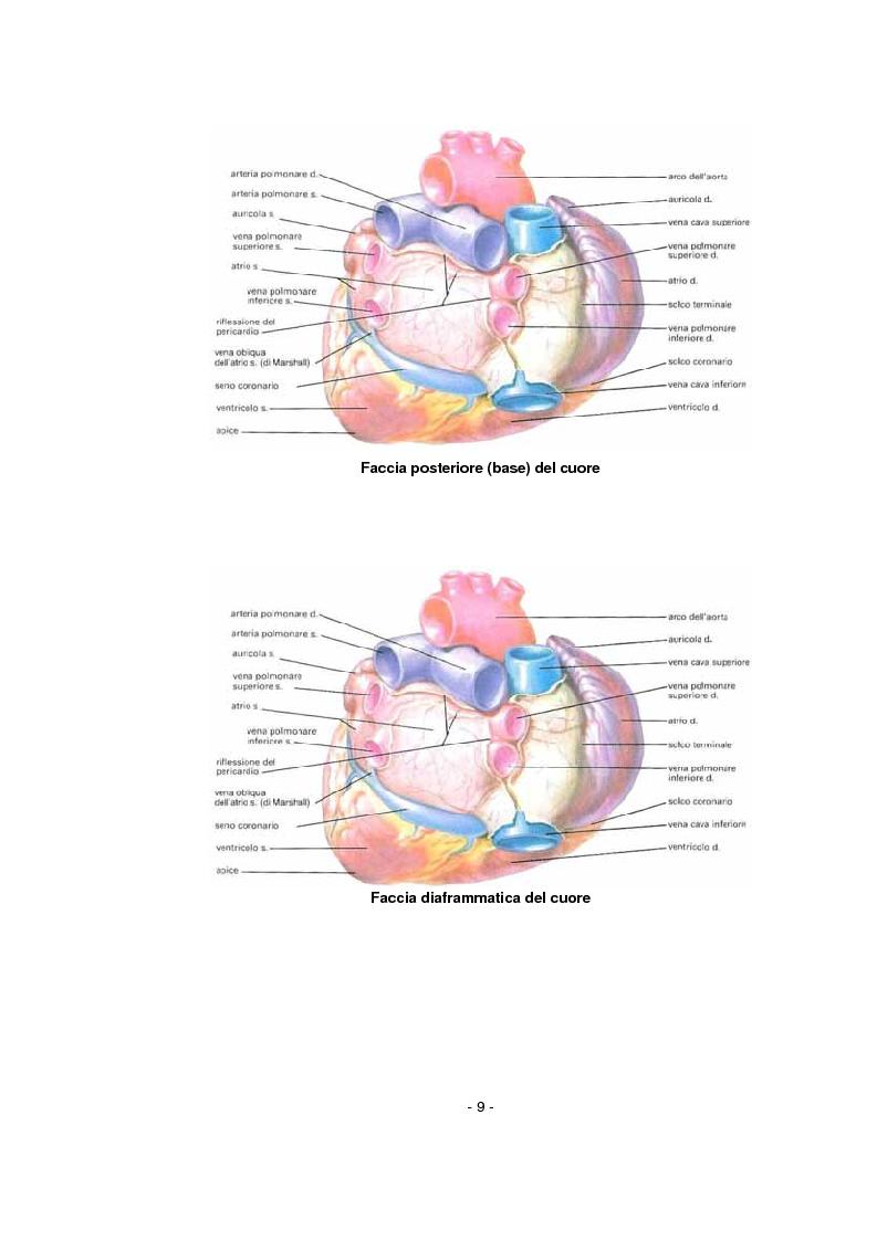 Anteprima della tesi: L'infermiere nella gestione dell'arresto cardiocircolatorio e nella successiva diagnostica cardiovascolare ambulatoriale, Pagina 5