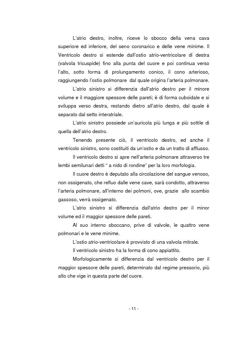 Anteprima della tesi: L'infermiere nella gestione dell'arresto cardiocircolatorio e nella successiva diagnostica cardiovascolare ambulatoriale, Pagina 7