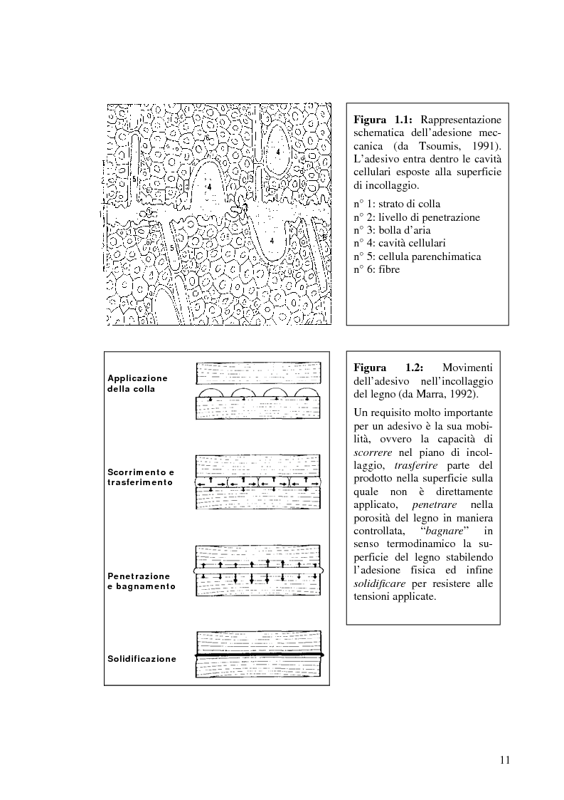 Anteprima della tesi: Prove di incollaggio per legno lamellare di Robinia Pseudoacacia L. destinato all'impiego in ambiente esterno, Pagina 11