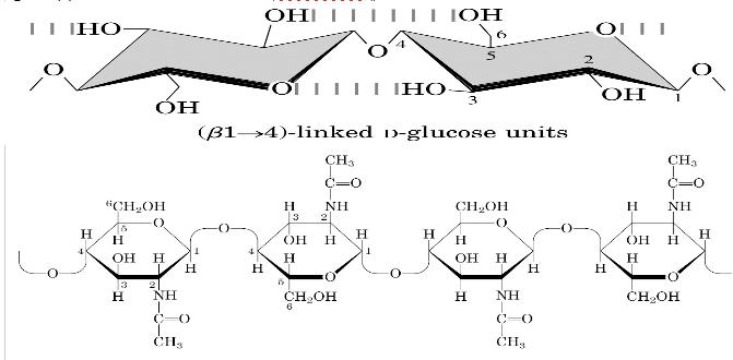 Funzione della cellulosa